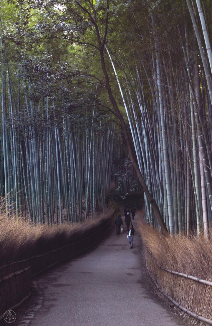 Japan Bamboo Grove