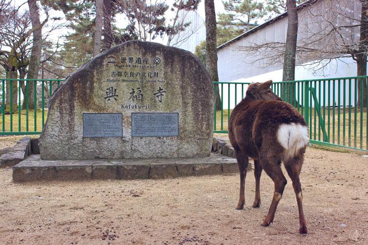 Deer Nara Park