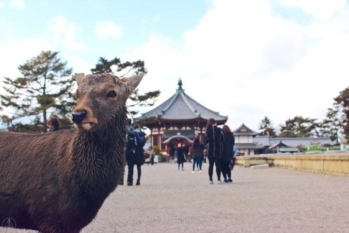 Tokondo and Five Storey Pagoda of Kofukuji Temple Nara Park Japan