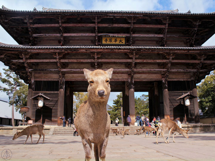 Deer  Nandaimon Gate Nara Japan